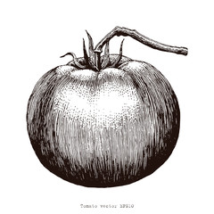 Tomato hand drawing engraving illustration