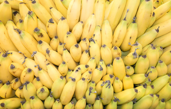 Lot bunch of fresh banannas in food market, yellow color background.