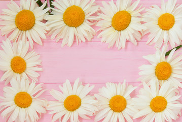 Daisy flowers on a pink wooden background. Summer backdrop.