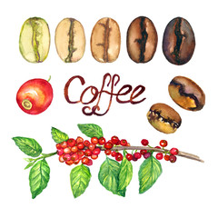Coffee branch with fruits and line of level coffee roasts from light to dark, isolated hand painted watercolor illustration and inscription