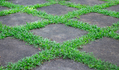greensward on playground