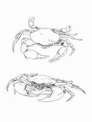 Vector vintage crab drawing. Hand drawn monochrome seafood illustration. Great for menu, poster or label.