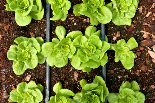 Plant Growing In Vegetable Garden Top View Close