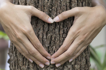 woman's hands making a heart shape on a tree trunk