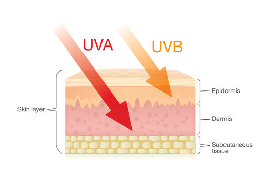 The difference of radiation types in sunlight which is harmful to the skin.Illustration about UVA penetrate deep than UVB.