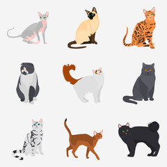 Set of cat breeds color flat icons for web and mobile design