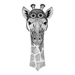 Camelopard, giraffe wearing aviator hat Motorcycle hat with glasses for biker Illustration for motorcycle or aviator t-shirt with wild animal