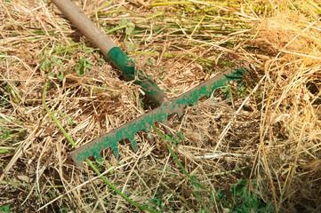 Rastrillo verde