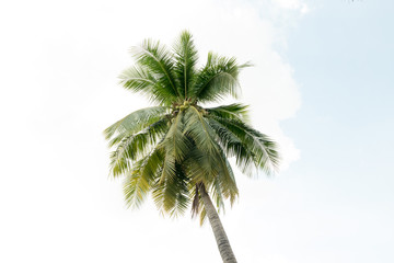Coconut palm trees on sky background