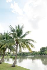 Coconut palm trees in public park- natural landscape