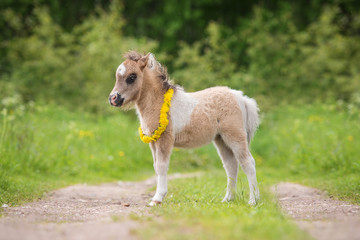 Little pony foal with a wreath of dandelions on its neck