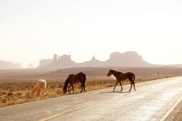 Wildpferde im Monumentvalley