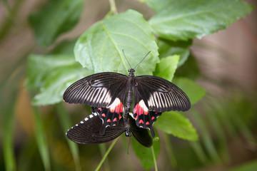 Dancing butterflies on the green leaf