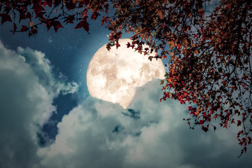 Wall Mural - Beautiful autumn fantasy - maple tree in fall season and full moon with cloud, star in night skies background. Retro style artwork with vintage color tone