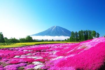 ニセコの絶景は芝桜