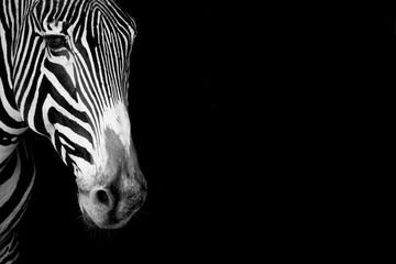 Wall Murals Zebra Close-up of Grevy zebra head in mono