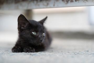 不安な表情を見せる黒猫の赤ちゃん