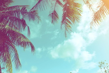 Coconut palm trees and  sky clouds  with sunlight background. vintage tone