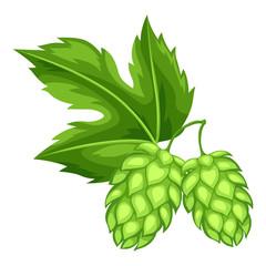 Green hops with leaf. Illustration for Oktoberfest
