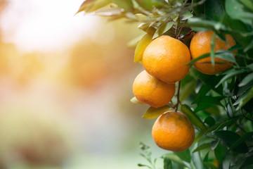 fresh orange with flare light