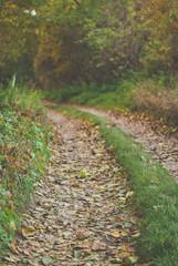 Autumn way through the woods