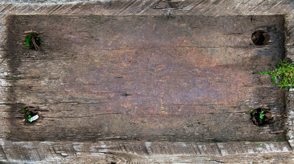 wood frame with moss on a log. wood place the graphic in rustic style. wooden copy space