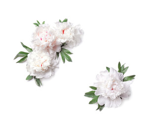 Composition of beautiful peony flowers on white background