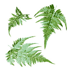 set of green fern leaves, tropical plant vector illustration
