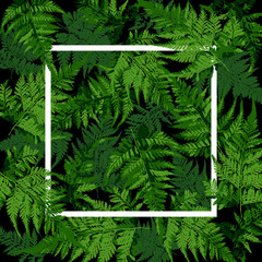 white square frame on tropical leaves, fern plant vector illustration