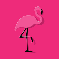 Flamingo pink on a pink background.
