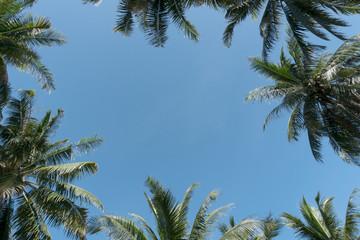 palm leaves frame on blue sky background.