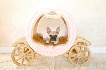 puppy on carriage