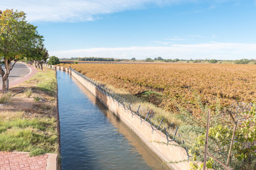 Irrigation canal and vineyard in autumn colors in Keimoes
