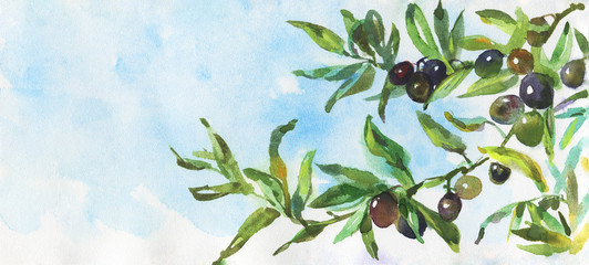 Watercolor black olive. Hand drawn olives branch on blue sky background. Painting realistic nature illustration