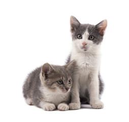 Two cute grey kittens isolated on white background