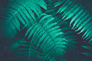 Nature fern as a background Wall mural