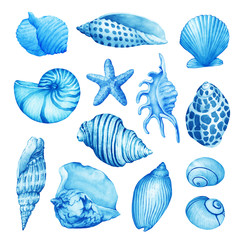 Set, composition of underwater life objects - blue sea shells. Illustrations of marine design. Hand drawn watercolor painting on white background.