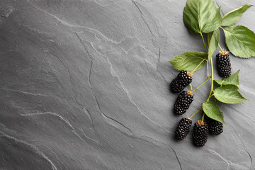 Fresh ripe blackberry branch on textured stone background, top view