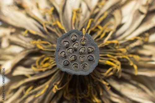 Dried lotus flower stock photo and royalty free images on fotolia dried lotus flower mightylinksfo