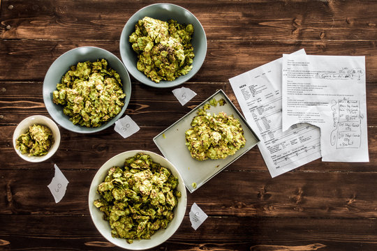Beer Recipe and Whole Dried Hops ready to be Pitched in the Kettle of a Homebrewer.