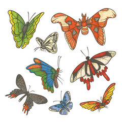 Vector textured color set illustration. Different tropical butterflies flying and sitting. Outline drawing sketch colored kit drawn in ink isolated on white background.