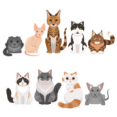 Vector illustrations set of many different kittens. Cats characters in cartoon style
