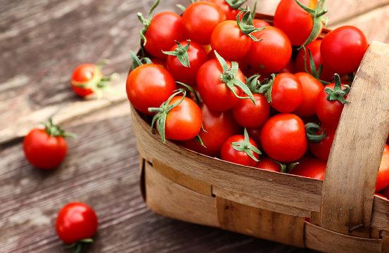 basket harvest fresh tomato