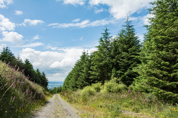 Poster Hill Path in a forest on a sunny summer day - Irish hills