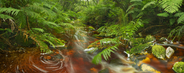 River through rainforest in the Garden Route NP, South Africa