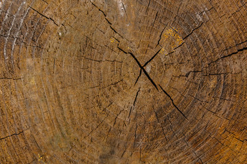 heartwood texture background