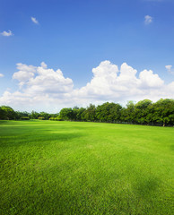 landscape of grass field and green environment public park