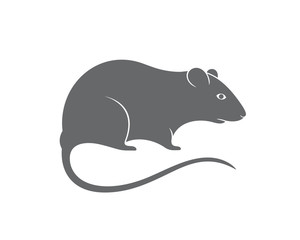 Gray rat. Mouse. Isolated rat on white background