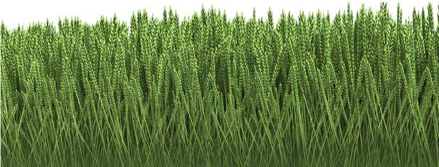 3D illustration of green grass