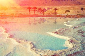 Fototapete - Dead sea salt shore. Palm trees on the shores of the Dead Sea